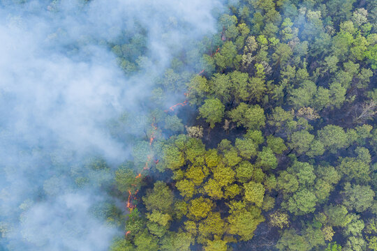 Panorama aerial wildfire is burning trees dry grass in the forest.