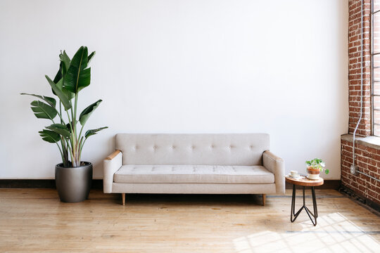 Modern beige fabric couch and plant in living room