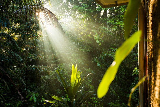 Morning light streaming through the trees in a tropical forest in Bali.