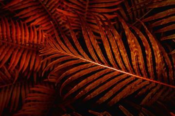 Obraz Full Frame of Fern Leaves Texture Background. tropical leaf - fototapety do salonu