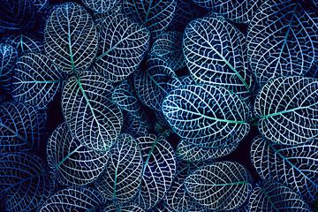 Obraz closeup nature view of tropical leaf background, dark tone concept - fototapety do salonu