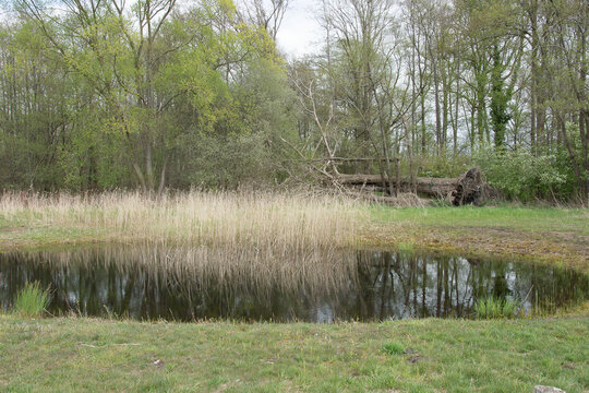 water in pool in nature area reflects reed and trees