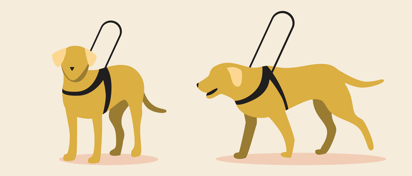 Guide dog isolated, flat vector stock illustration with set or collection of yellow labrador dogs as blind assistant or companion
