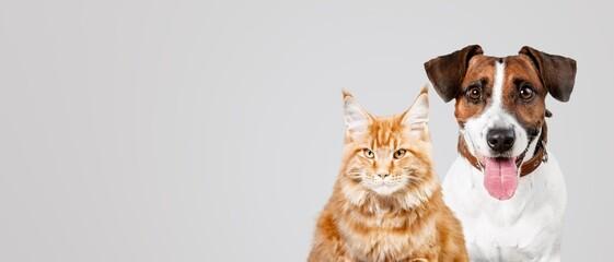 Cat. - fototapety na wymiar