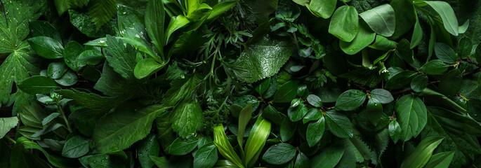 Fototapeta Green leaves as background obraz