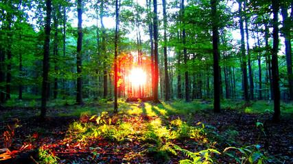 Fototapeta Zachód słońca w wiosenny dzień obraz
