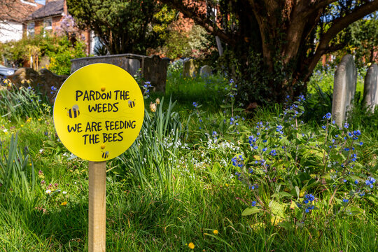 Pardon the weeds, we are feeding the bees sign placed in amongst wild flowers in a church yard
