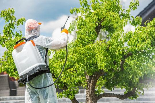 Gardener Insecticide Pear Tree Inside His Garden