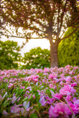 Fototapeta Kwiatowy dywan obraz