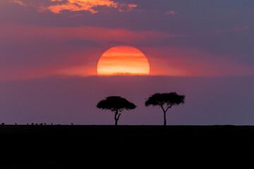 Canvas Prints Crimson Scenics sunset with trees and wildlife on the savanna