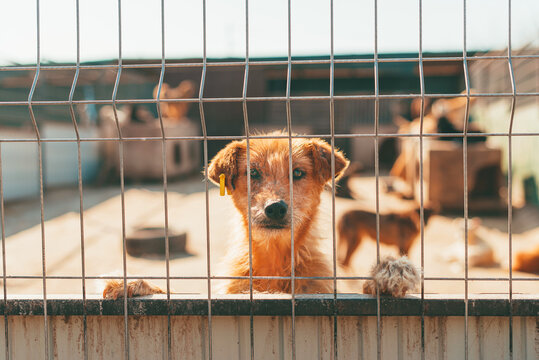 Portrait of cute red hair dog looking trough fence. Adoption concept