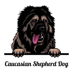 Obraz Caucasian Shepherd Dog - dog breed. Color image of a dogs head isolated on a white background - fototapety do salonu