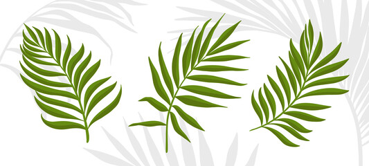 Palm leaves. Set of tropical plants isolated on white background. Simple vector elements for your design. Wall mural