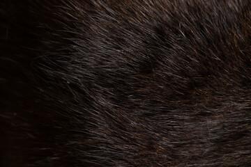 background of black cat fur close up, black cat, wool
