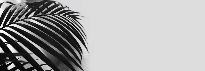 Black and white Palm leaf. Tropical plants. Nature light and shadow background.