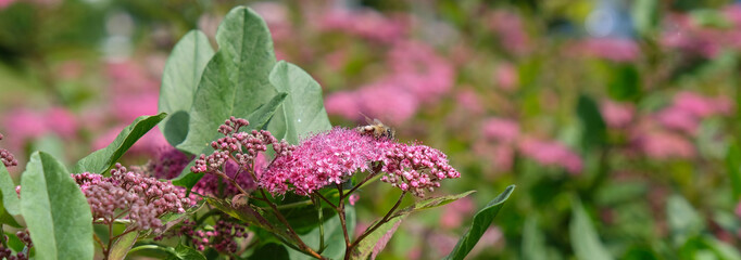 Obraz działka kwiat owad - fototapety do salonu