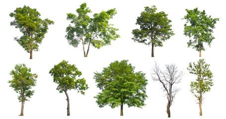 high qaulity collection tree on white background - fototapety na wymiar