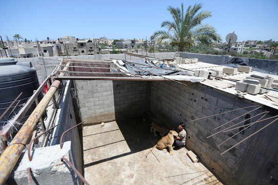 A Palestinian man plays with pet lion cubs on a house rooftop in Khan Younis