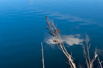 Fototapeta Suche, ozdobne trawy na tle tafli wody.  obraz