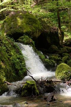 Kleiner Wasserfall im frühlingshaften Laubwald