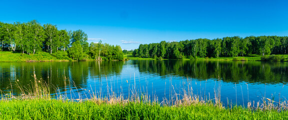 summer river or lake surrounded by young birch forest, clear bright blue sky, summertime sunny day panoramic landscape