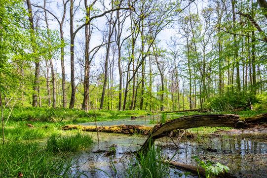 Biotop in einem Wald als Lebensraum für viele Tiere und Pflanzen