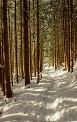 sciezka w zimowym lesie