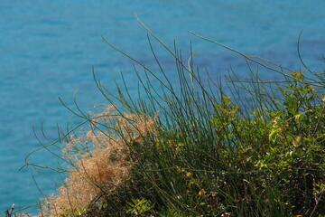 Zielona trawa na tle turkusowego morza