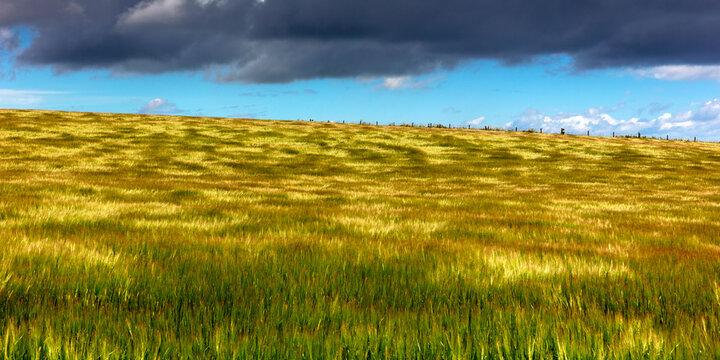 wind over the cornfield