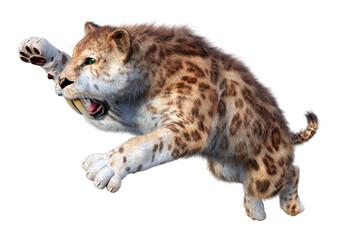 Fototapeta 3D Rendering Sabertooth Tiger on White obraz