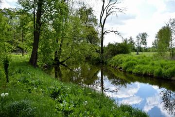 Park, zielona trawa, drzewa i woda w stawie. - fototapety na wymiar