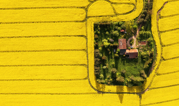 Aerial view of a farm in the middle of the rapeseed field with copy space