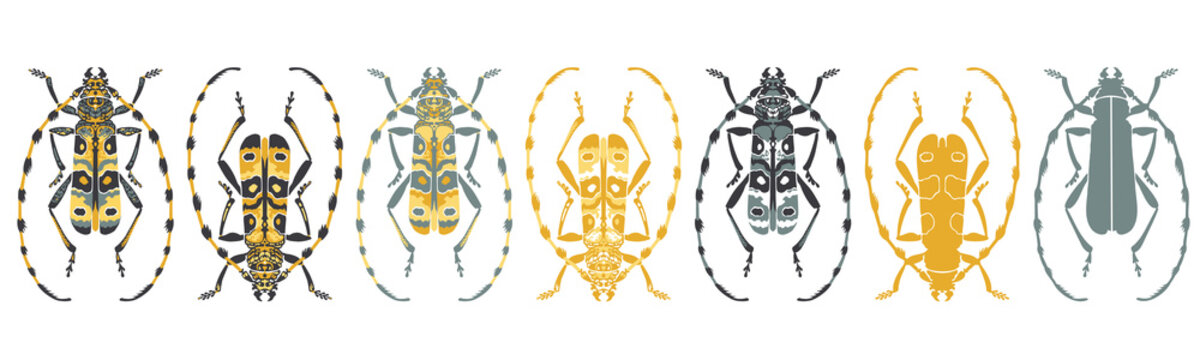 Set of stylised, decorative, longhorn beetle insect, vector illustrations, isolated on a white background.