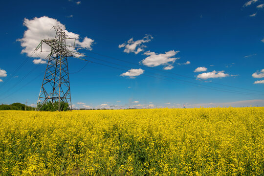 Power line support and high voltage electric line over blooming canola field