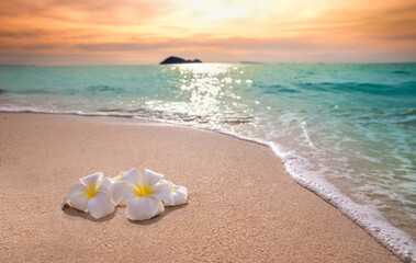 White frangipani plumeria flowers on sand at the beach front of the ocean waves background.