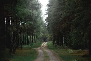 road in the woods - fototapety na wymiar