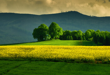 Obraz Spring on fields - fototapety do salonu