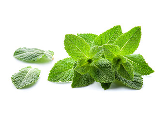 Fototapeta Fresh mint leaves obraz