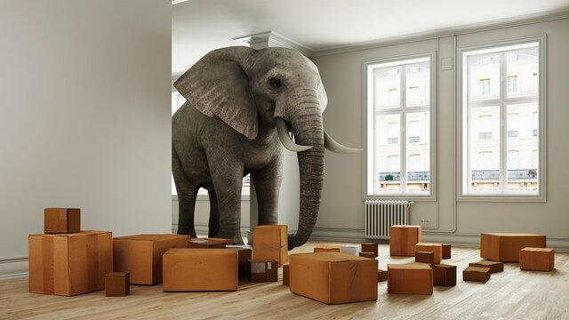 Starker Elefant mit Umzugskartons beim Umzug im Raum
