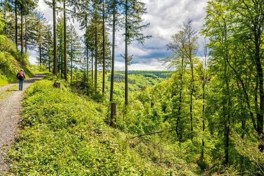 Wanderweg oberhalb des Brexbachtales (Rheinsteig)