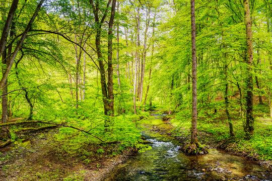 Frühling im Brexbachtal im Westerwald