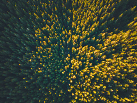 Aerial top view of summer green trees in forest in Slovakia. Drone photography