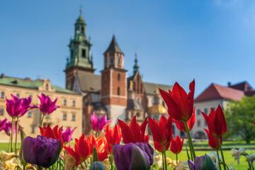 Czerwone wiosenne tulipany w porannym słońcu