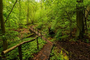Obraz Rezerwat Buki nad jeziorem Lutomskim | Sierakowski Park Krajobrazowy - fototapety do salonu