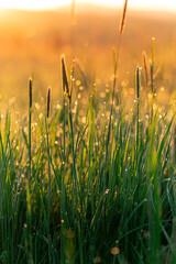 Łąka o wschodzie słońca - fototapety na wymiar