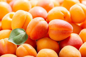 fresh apricots with leaves as background