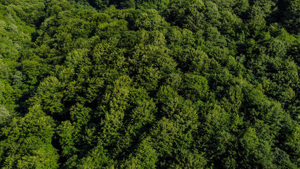 Aerial drone view of green forest in spring. Trees growing in nature. Beautiful Deciduous forest, view from above.