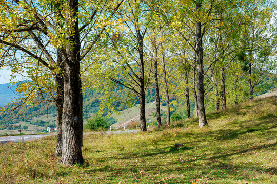 trees on the grassy meadow. countryside mountain scenery on a bright forenoon in early autumn. wonderful nature landscape in sunny weather. travel back country concept