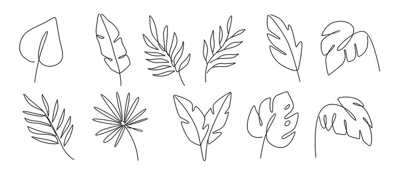 Line drawing vector leafs palm tree. Modern outline art style.