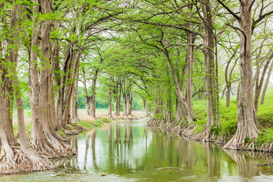 Trees along the Guadalupe River in the Texas hill country.